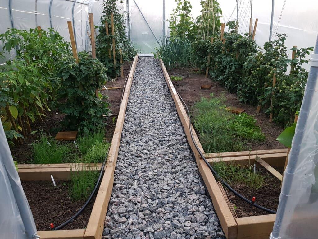 Odling i tunnelväxthuset 2020